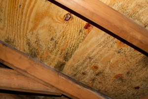 Mold growing on roof sheathing in Torrington attic